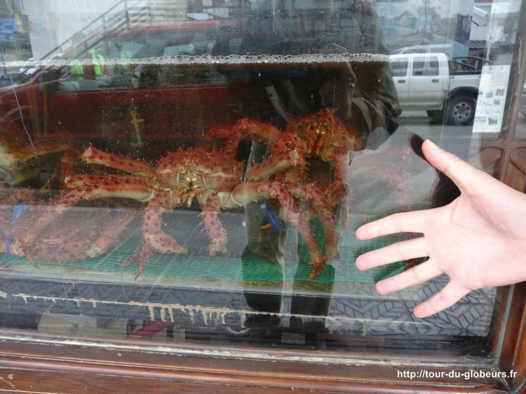 Argentine - Ushuaïa - King Crabe vivant