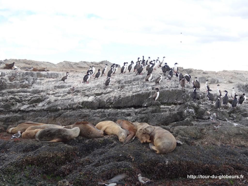 Argentine - Ushuaïa - Lion de mer