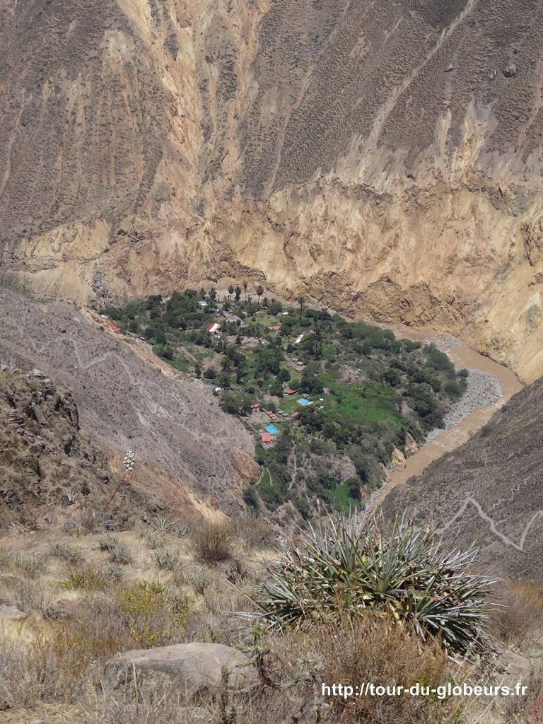Colca - oasis au fond du canyon