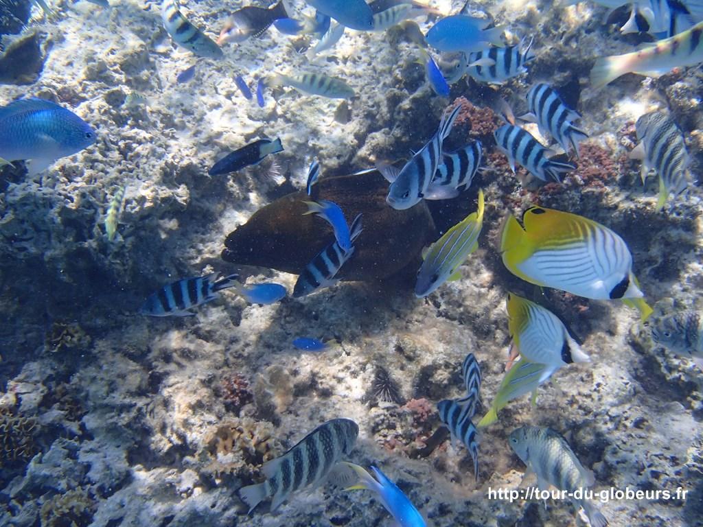 Bora bora - Fond sous-marin : poissons et murène