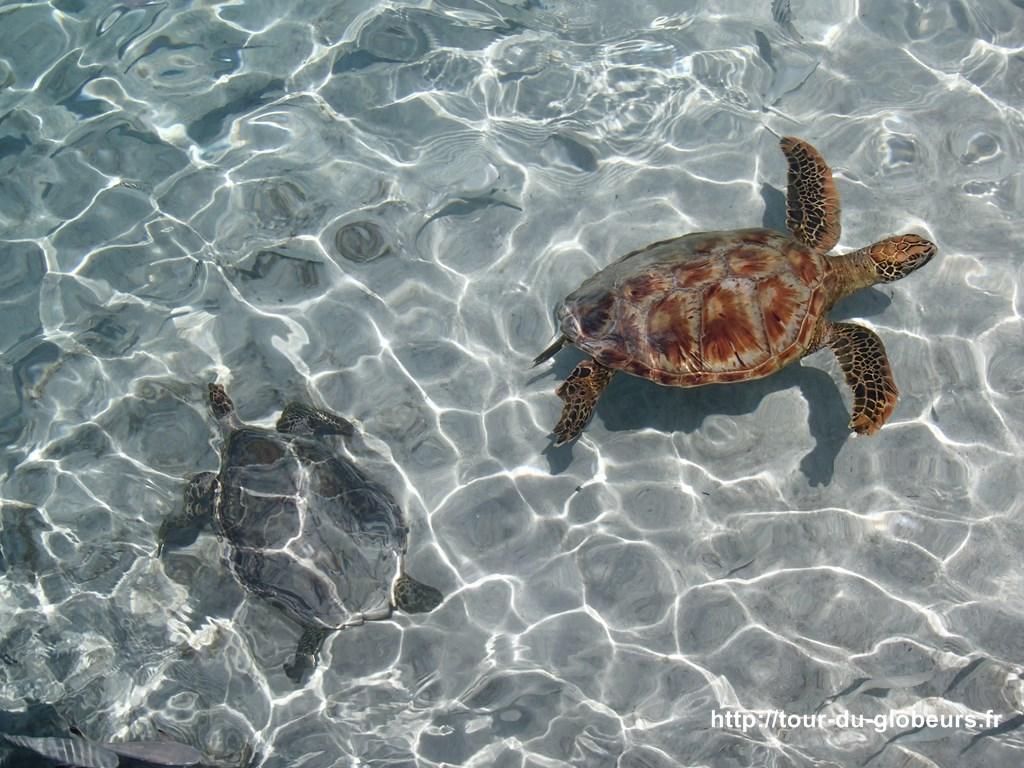 Bora bora - Lagoonarium - Parc aux tortues