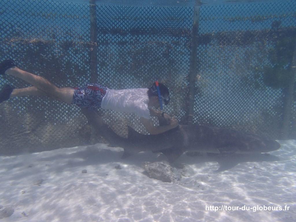 Bora bora - Lagoonarium - un requin dormeur promène Nicolas