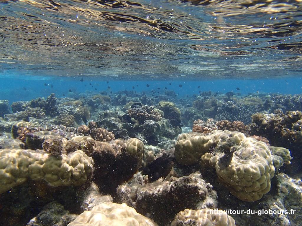 Huahine - Fonds sous-marin, coraux et poissons