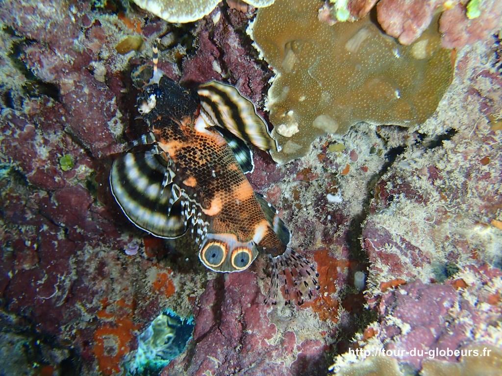 Huahine - Fonds sous-marin : poisson multicolore