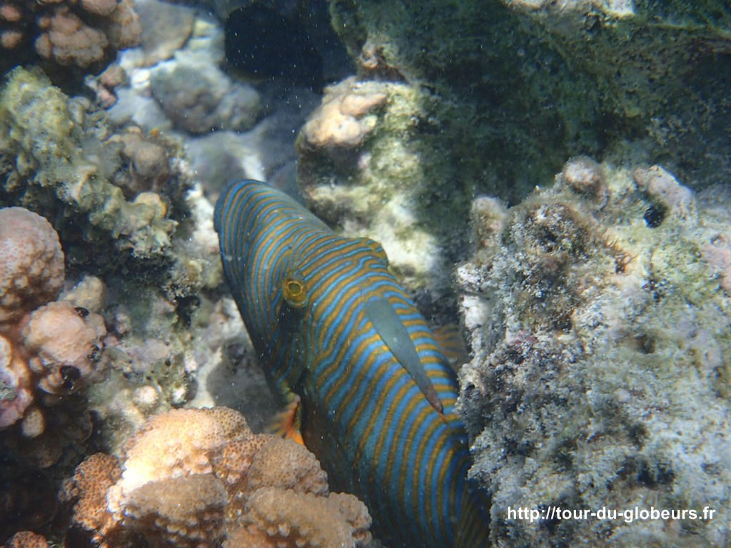 Huahine - Fonds sous-marin : poisson multicolore
