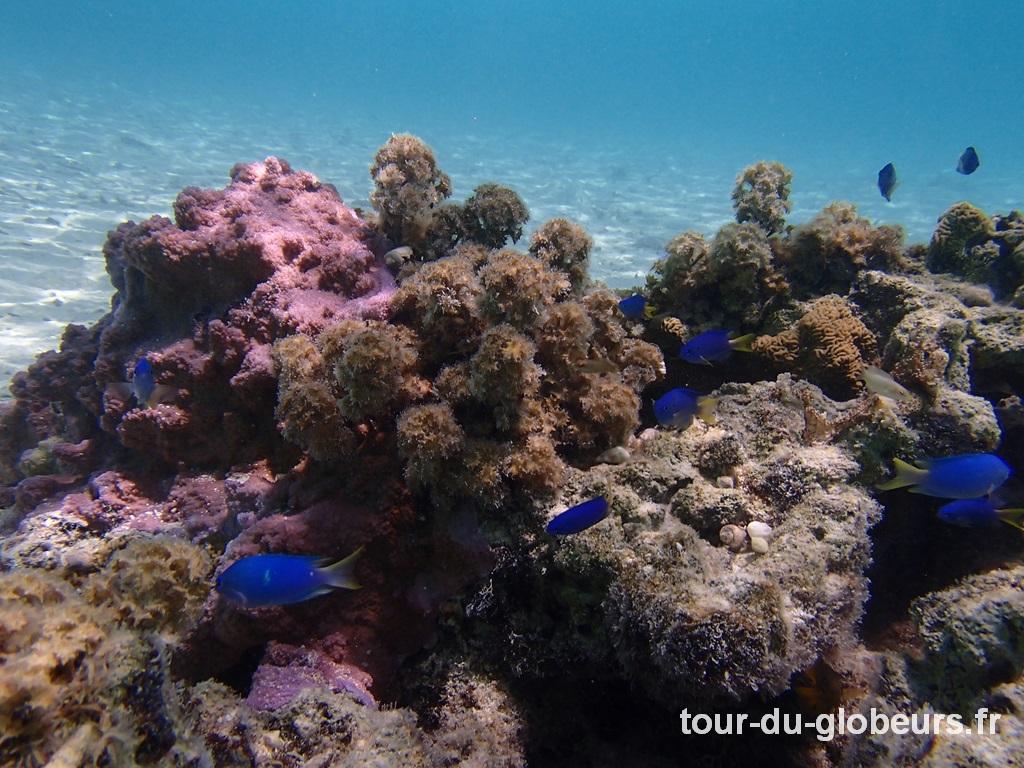 Maupiti - Coraux et poissons