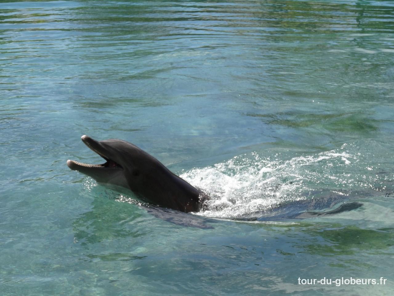 Moorea - dauphin de l'Hôtel Intercontinental