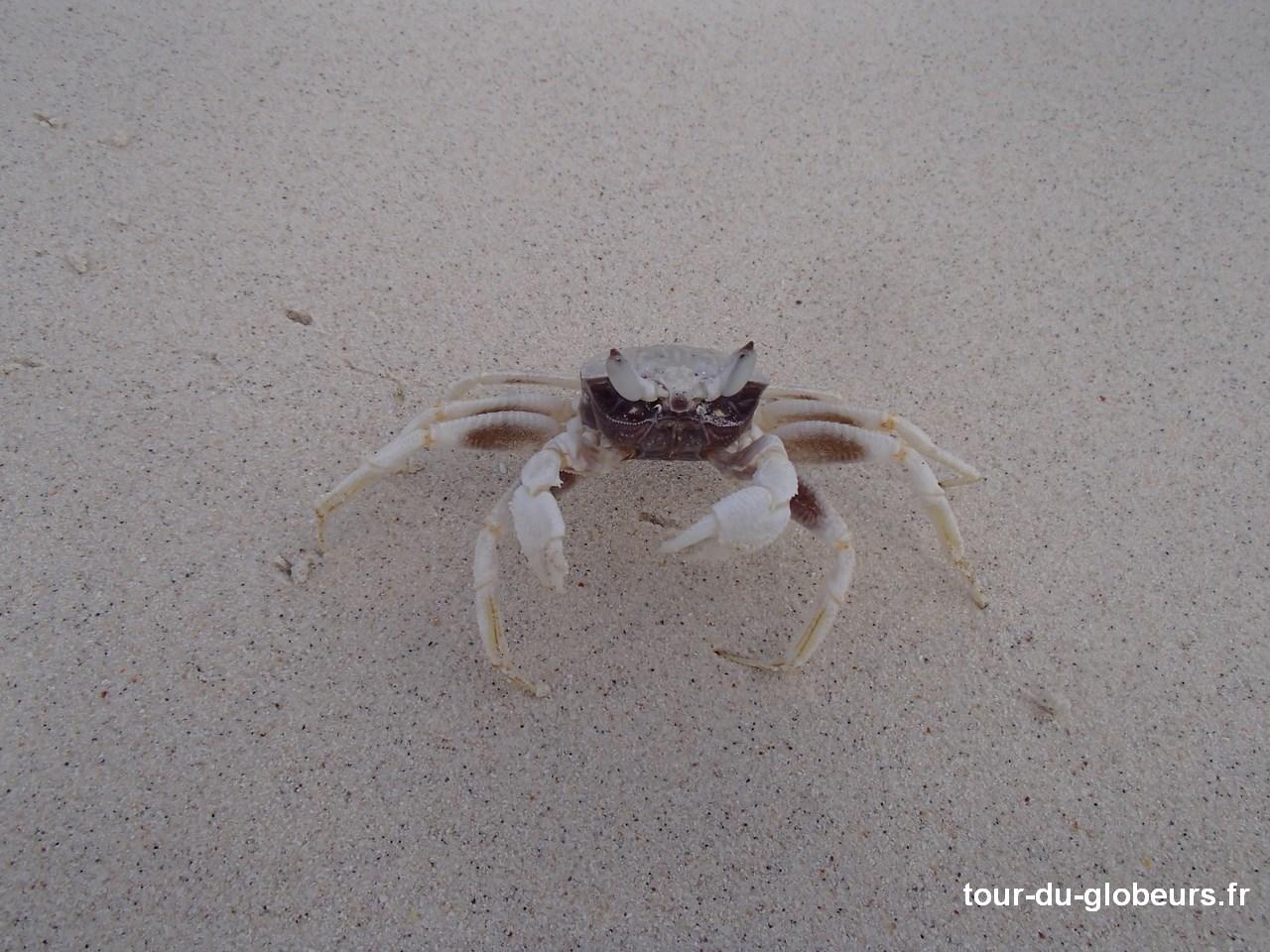 Nle-Calédonie - Lifou - Crabe